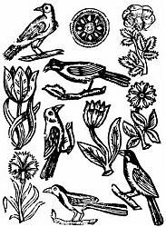 Clicca sull'immagine per ingrandirla  Nome:  lingua_degli uccelli.jpg Visite: 560 Dimensione:  48.1 KB