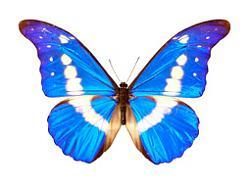 Clicca sull'immagine per ingrandirla  Nome:  farfalla.jpg Visite: 560 Dimensione:  22.7 KB